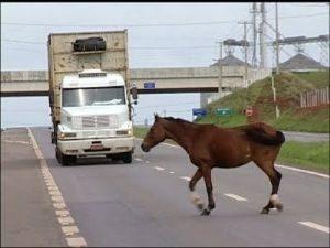 g n 106 4t2x 300x225 - Projeto do Dep. Ricardo Izar pela rápida remoção de animais envolvidos em acidente é aprovado.