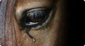 g n 138 7c5f - Izar se manifesta contra o abate de equinos
