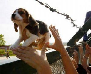 g n 313 1h8k 300x246 - Anda: Projeto institui o dia nacional da proteção animal