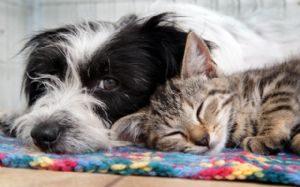 g n 341 5z3d 300x187 - Anda: Projeto prevê que despesas veterinárias de animais adotados sejam deduzidas do imposto de renda