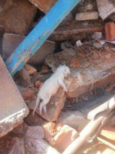 g n 346 3i0m 225x300 - Anda: Demolição de casa no Tatuapé com cerca de 40 gatos é paralisada após reunião