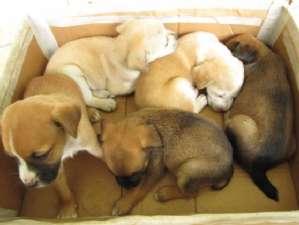 g n 42 1d7o - Comissão aprova projeto que substitui execução por esterilização de animais