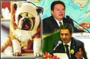 g n 440 1k8n 2 300x197 - Leis mais rígidas para quem cometer crimes contra animais