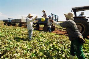 g n 47 6z3d - Projeto de Lei do Deputado Ricardo Izar Jr. amplia seguro-desemprego a trabalhadores rurais