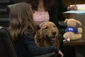 g n 495 1i8l 300x200 - Cachorros são utilizados em tribunais nos EUA para acalmar crianças vítimas de abusos