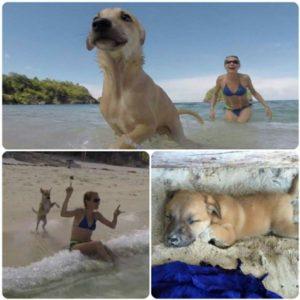 g n 505 4e2h 300x300 - Turista se apaixona por cão perdido durante férias e o leva para casa