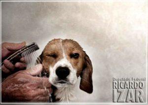g n 512 6p3s 300x213 - Comissão aprova projeto que exige câmera em serviço de banho e tosa de cães