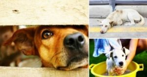 g n 513 5z3d 300x157 - Holanda se torna o 1º país sem cães abandonados e sem sacrificar animal algum