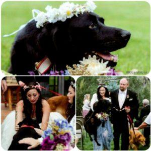 g n 528 1n8r 300x300 - Labrador com tumor cerebral leva sua dona até o altar