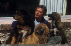g n 531 1j8m 300x197 - Ator famoso vira o salvador para centenas de cães sem lar
