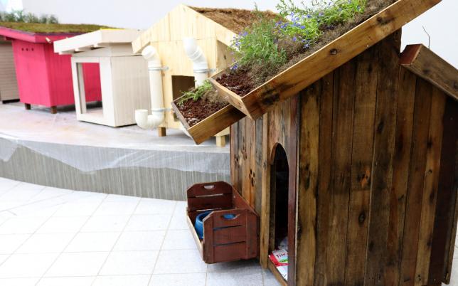 3 2 - Alunos de engenharia constroem incríveis casas sustentáveis para cachorros
